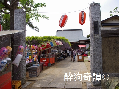 市川 高圓寺の長寿藤