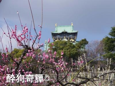 大阪城 梅