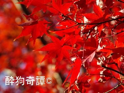 紅葉の松戸・本土寺 2013