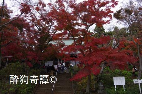 松戸・本土寺の紅葉 2014