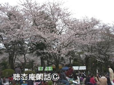 花見 in 里見公園
