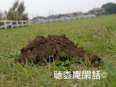 _digital_images_2011_11_07_imgp0024[1]曽谷貝塚 - 市川の歴史・観光 Vol.04 -