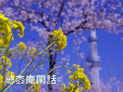 隅田公園と東京スカイツリー