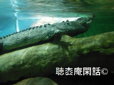 上海海洋水族館
