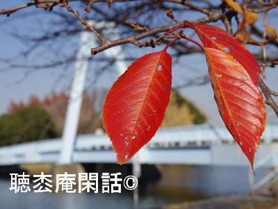 水元公園散策