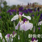 あやめ祭り(水郷佐原水生植物園) 2016