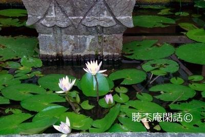 _digital_images_2009_04_04_20060821_029_[1]