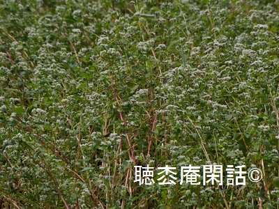 _digital_images_2011_08_29_imgp0020[1]